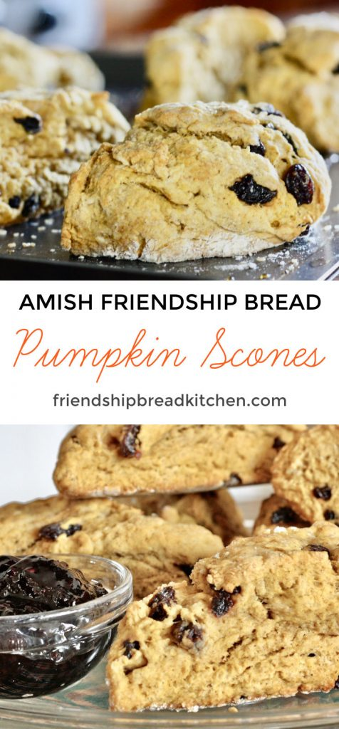 Pumpkin Amish Friendship Bread Scones