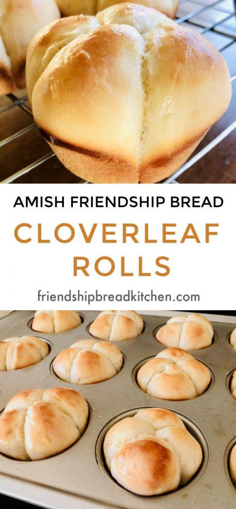 Amish Friendship Bread Cloverleaf Dinner Rolls